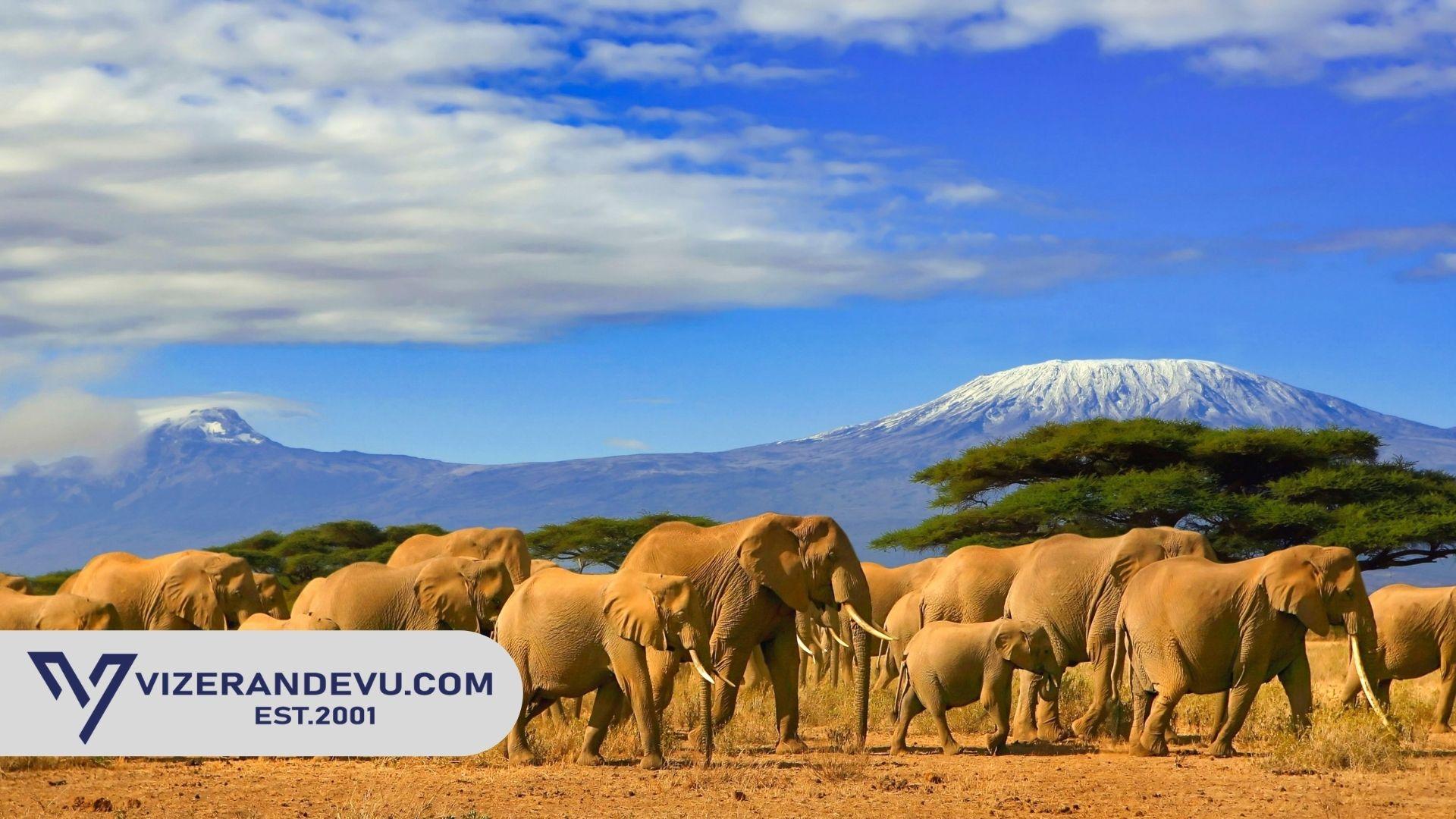 Tanzanya Vizesi: Randevu ve Başvuru (2021)